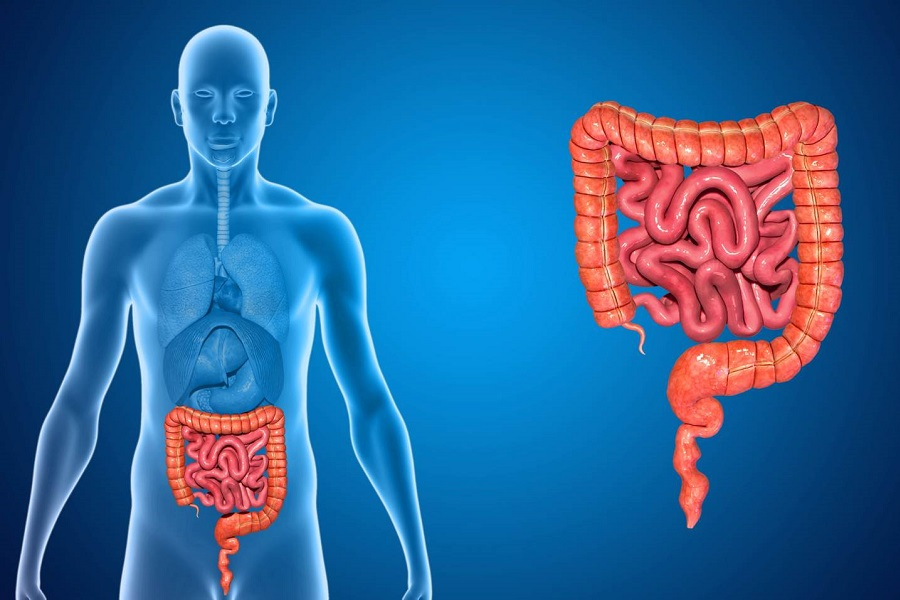 Sindrome dell'Intestino Gocciolante: da cosa è provocata e come guarire